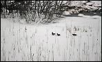 Гнездовья под снегом...