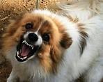 Профилактическая бесплатная вакцинация домашних животных против бешенства