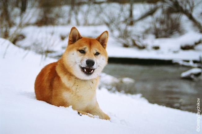 Наш пес Инсей