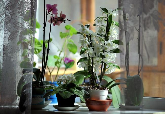 На окне-весна