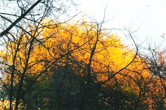 Осенний пожар