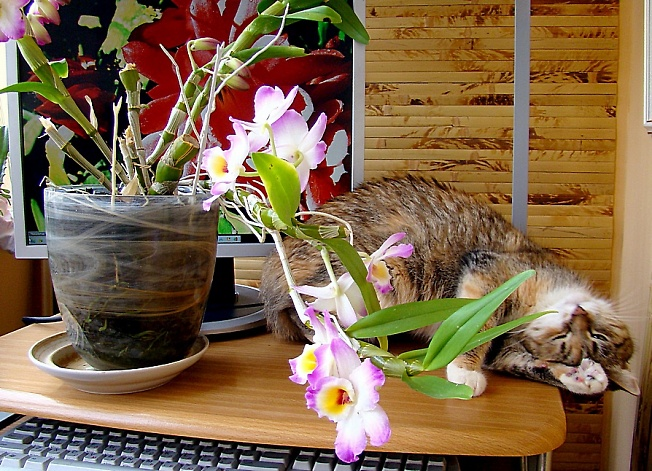 Хорошо праздновали ! 1 марта-день кошек.