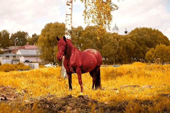 купание красного коня осенью