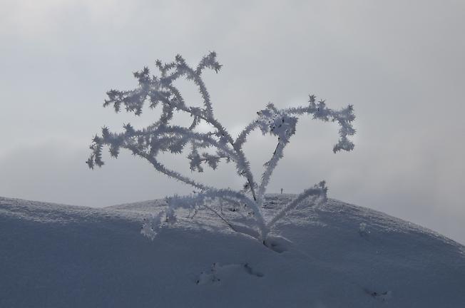 Колючая зима