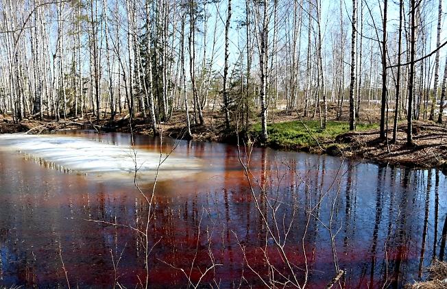 Весеннее  болотистое)