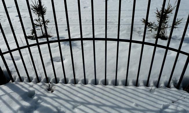 Если снег тает вокруг дерева, образуя круги с крутыми краями – весна крутая..)