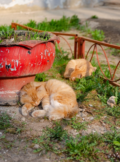 Рыжики весенние.