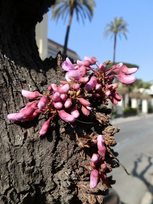 Где-то бродит весна...