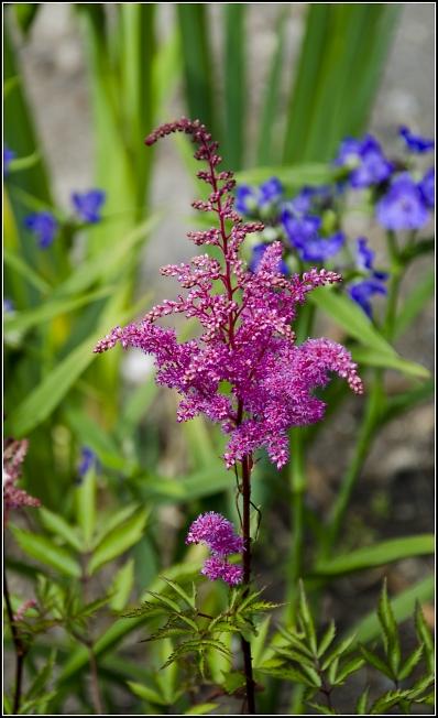Лютики-цветочки 2