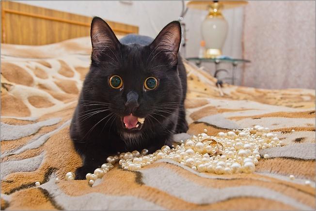 Свадебный кот)