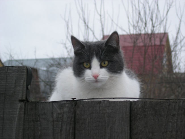 На заборе