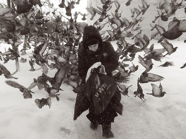 Баба  Люба  и  голуби  . . . .