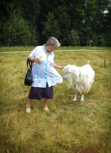 коза & капуста