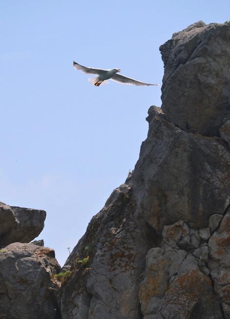 чайка,лети!