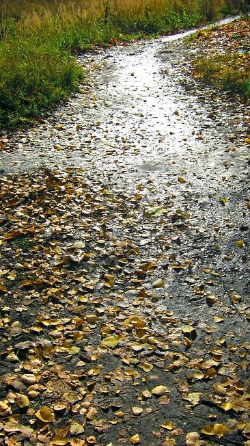 Листья жёлтые...