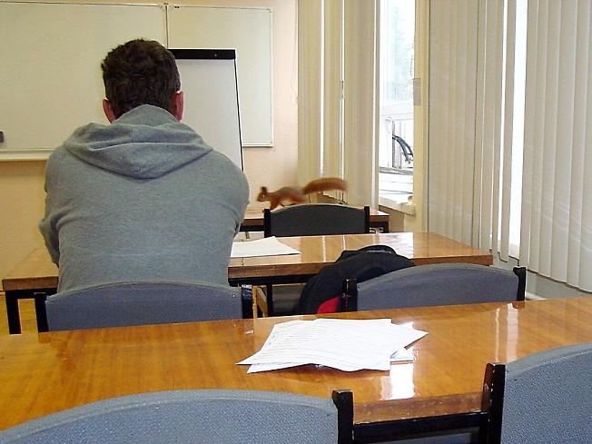 Белка заскочила в учебный класс прям с дерева...
