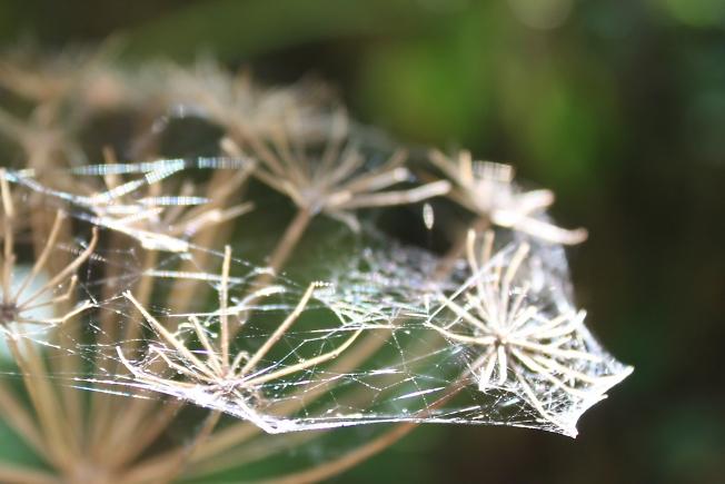 солнечная паутина