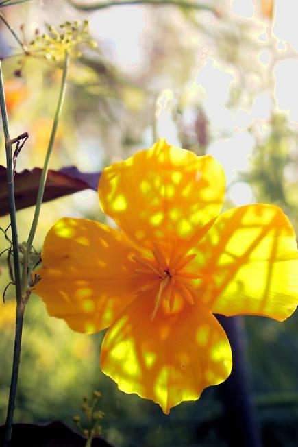 парящий цветочек