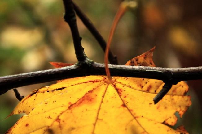 желтый лист осенний...