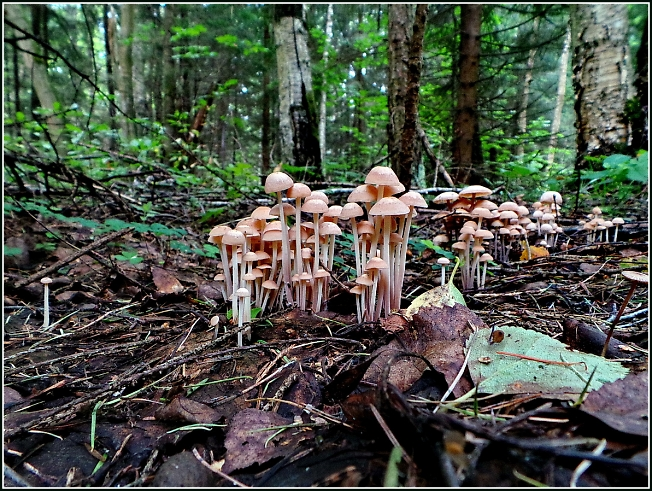 Такие вот грибы