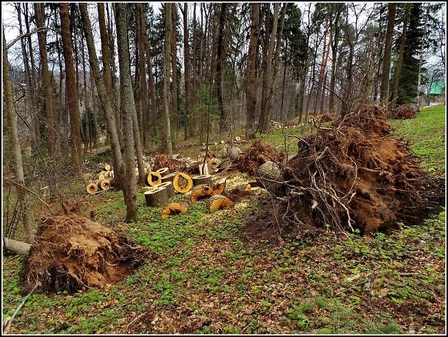 После бури в Абрамцево