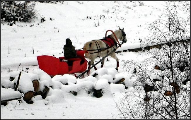 Лошадка катается на санях :)