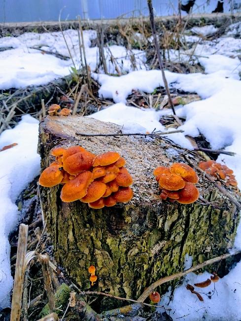 Декабрь, грибы пошли...