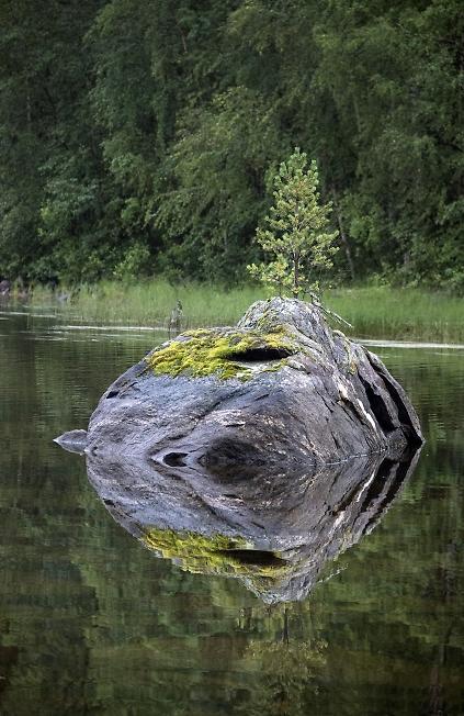 Сосенка на камне
