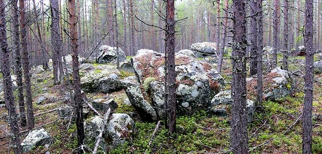 Камни в тайге