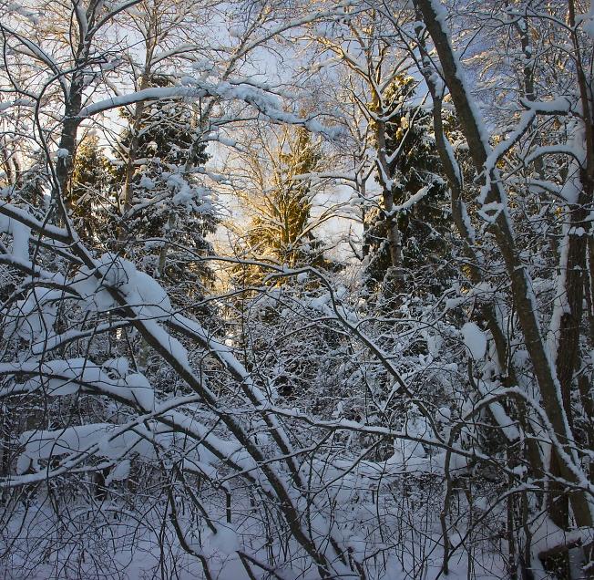 В рождественском лесу 2