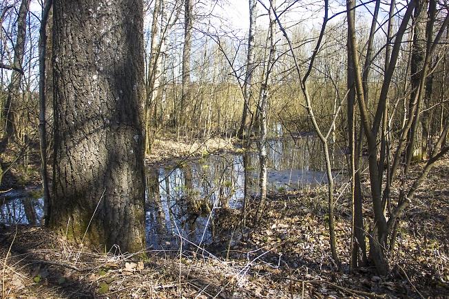 Подтопленный лес