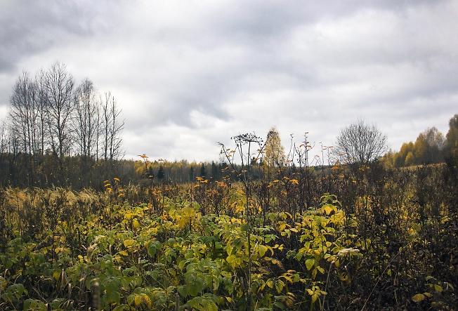 Осенние заросли