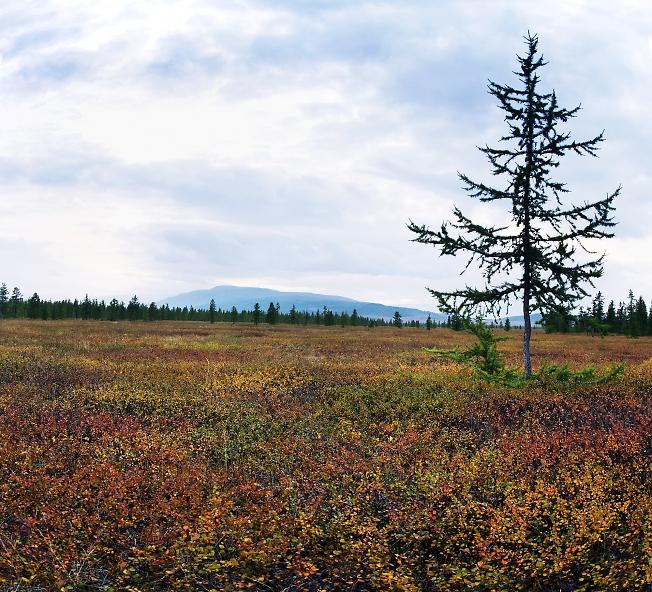 Осенняя тундра 3