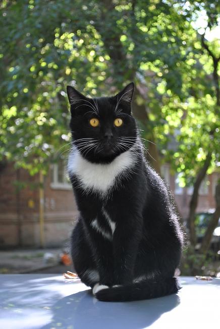 Про котов и их портреты )