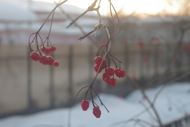 красна ягодка