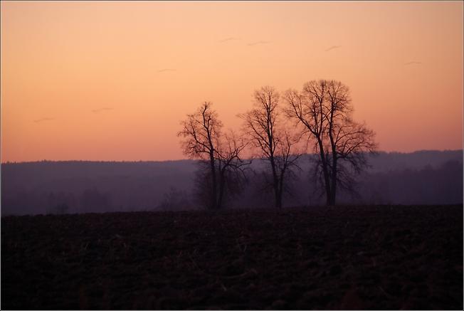 Три дерева у деревни Ботово