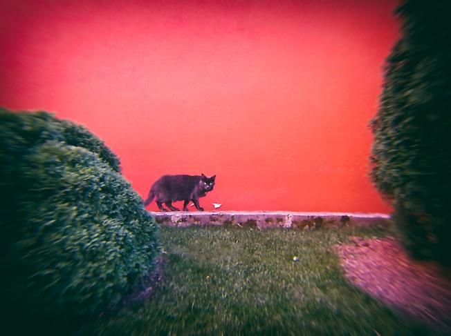 Черный кот на фоне красной стены
