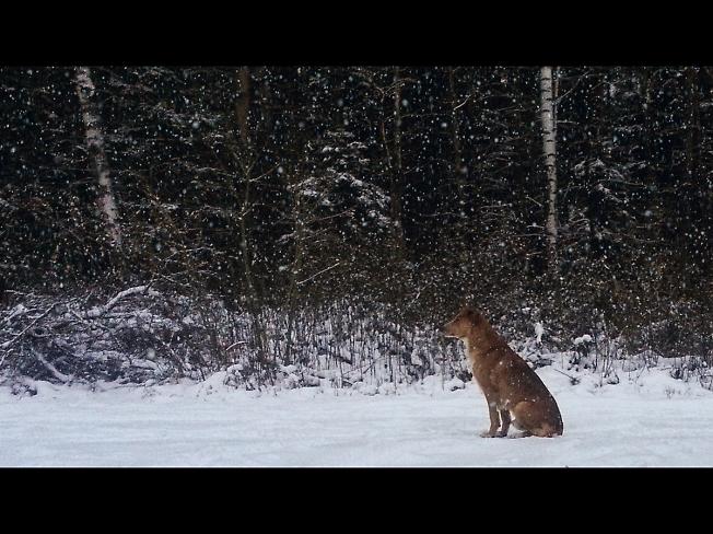 Долгая дорога в зиму...