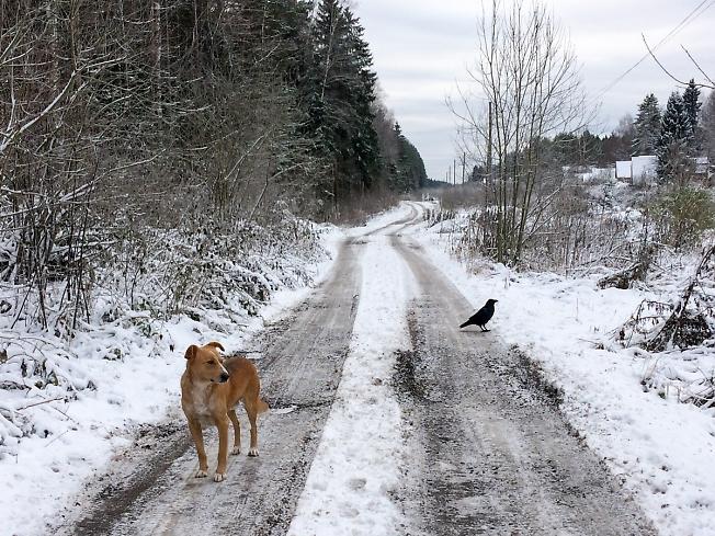 Карлос и Чубайс в тревожном ожидании зимы
