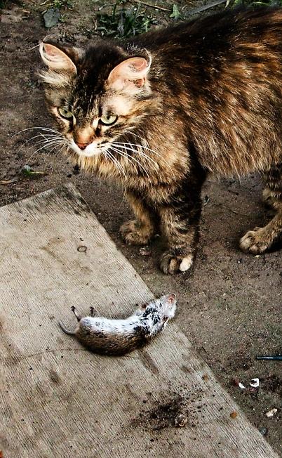 Драма на охоте...