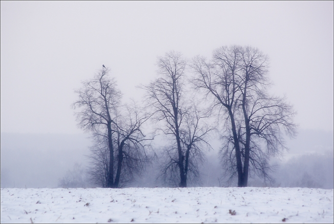 Пейзаж с вороной на дереве
