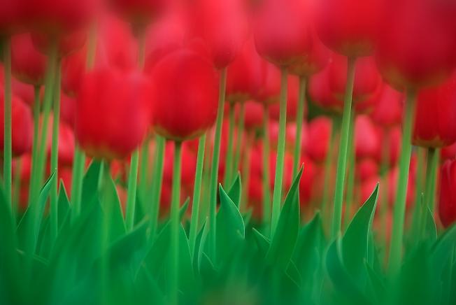 ...И вечная весна!