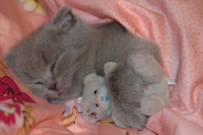 Спят усталые игрушки)