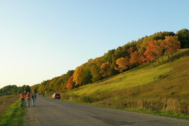 Осенние пешеходы