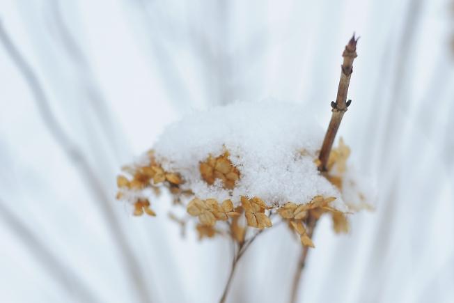 Наконец! зима!