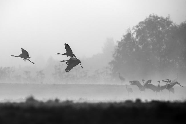 Серое утро в полях.....