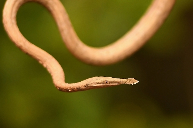 ПОРТРЕТ змеи
