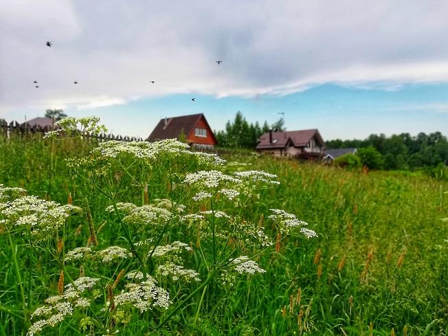 Напоенное солнцем и ароматом луговых и полевых трав