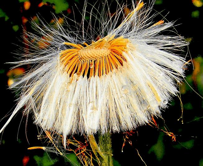 Ветреная блондиночка