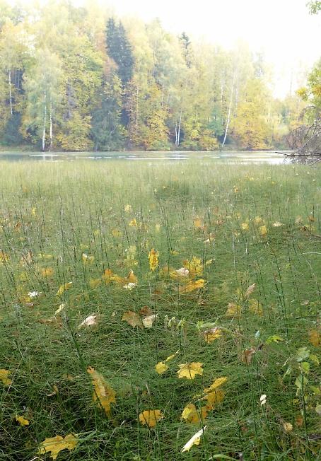 Осень в Абрамцево 2